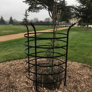 Wrought iron tree guard